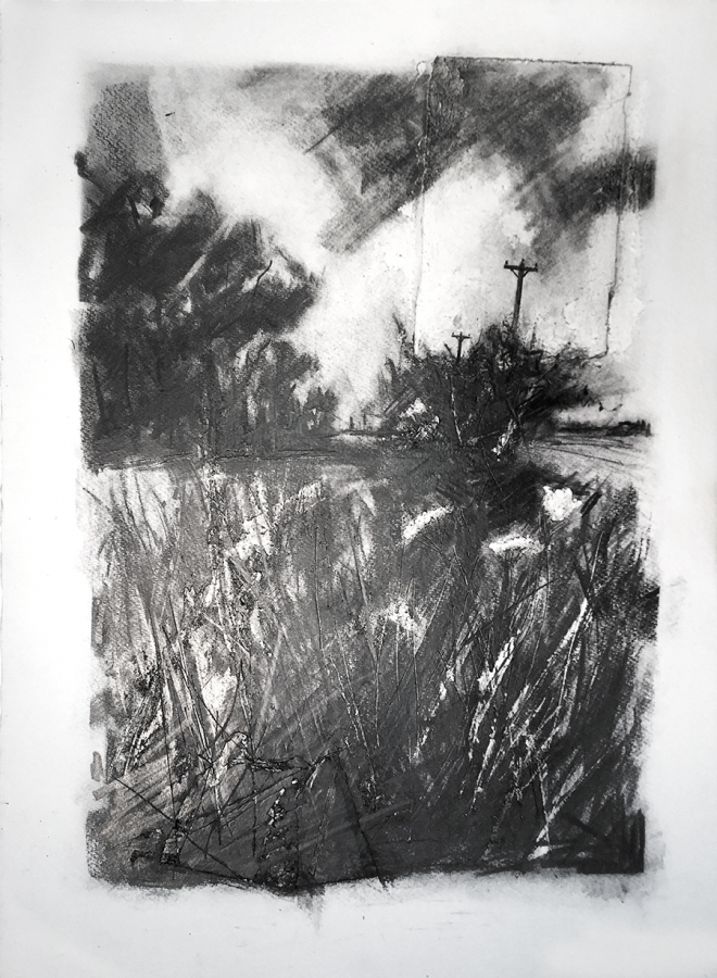 Roadside verge on Stray Road. Graphite on paper, 22x30 inches.